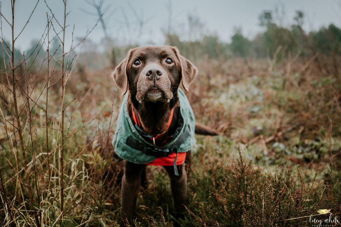 Dog Photographer Harrogate