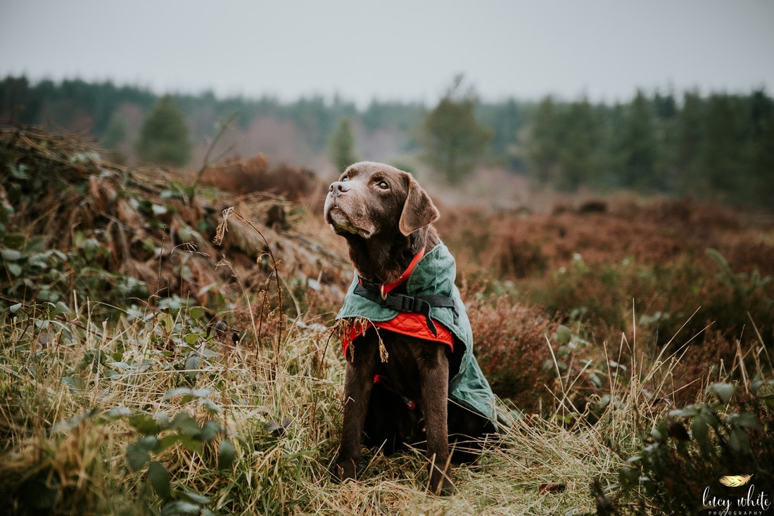 Dog Photographer Knaresborough