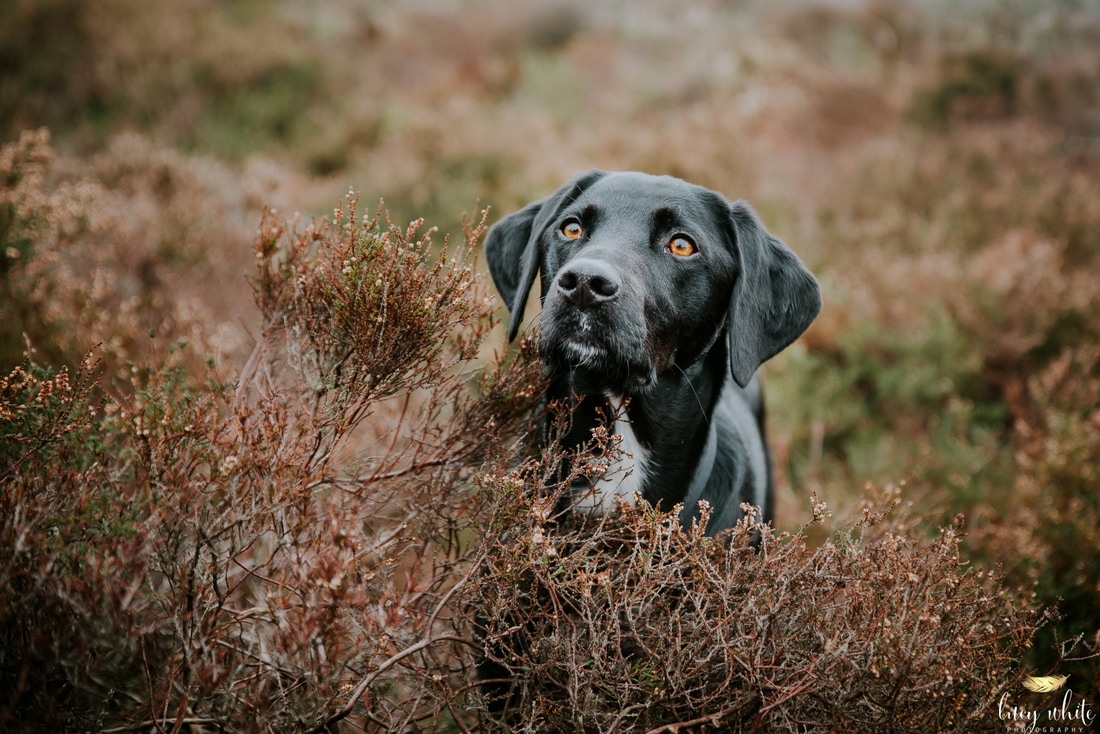 Dog Photographer Catterick