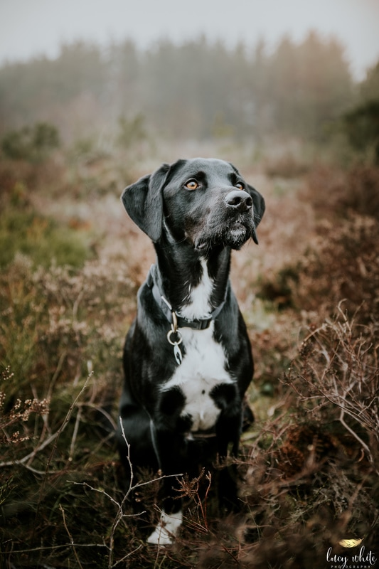 Dog Photographer Thirsk